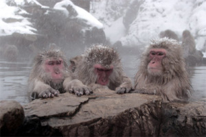 denki macaque